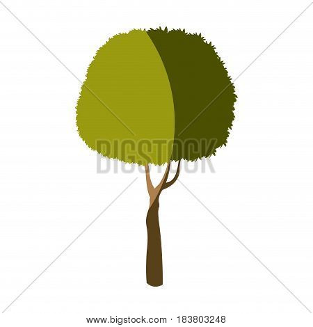 tree plant foliage stem trunk vector illustration