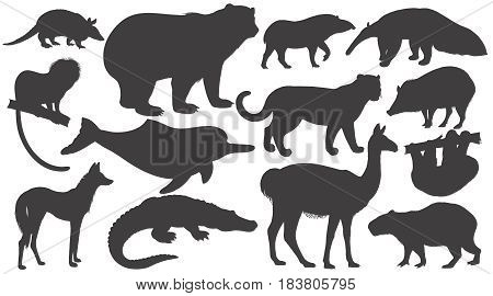 Black silhouettes animals of South America on white background set. Vector illustration art. Bear battleship tamarin wolf dolphin lama jaguar anteater peccary sloth tapir capybara caiman.