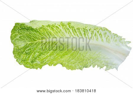 Fresh Green Romaine Lettuce, Isolated On The White Background