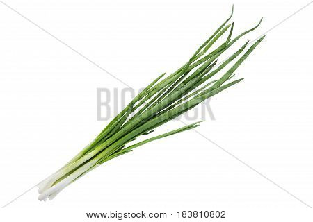 Small Bundle Of Washed Fresh Green Onions With Long Stems And Tiny Roots Over Isolated Background