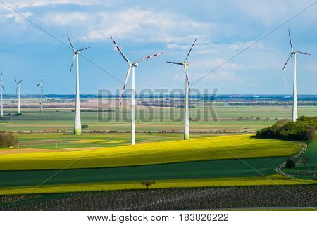 Windmills in yellow rape seed field wind turbunes in nature