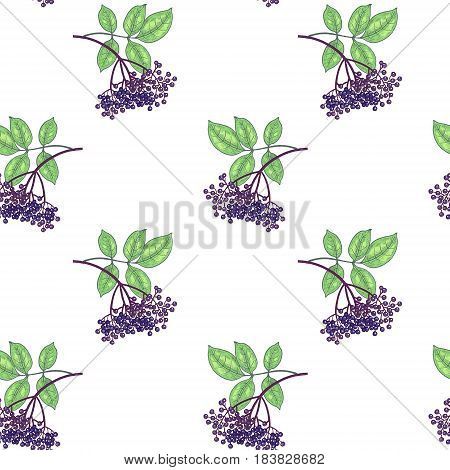 Vector seamless pattern. The branches with leaves and berries of elderberry on white background. Illustration for packaging design paper wallpaper fabric textile wrapping.