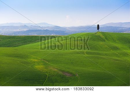 Alone Tree On A Hills Of Grass