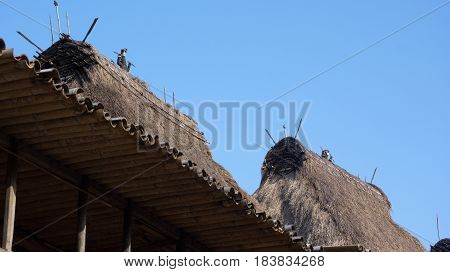 Detail of grass rooftops at Bena a traditional village with grass huts of Ngada people in Flores near Bajawa Indonesia.