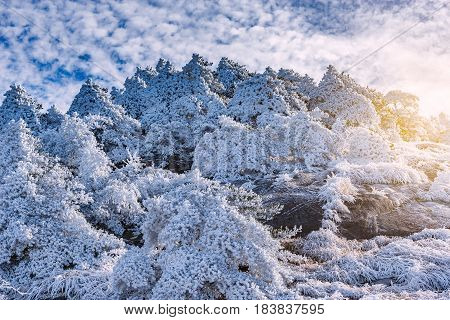 Sunrise above the frozen forest in Huangshan National park. China