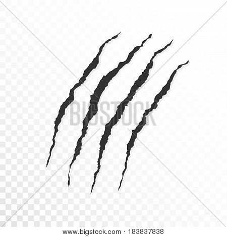 Claws scratches on transparent background. Vector illustration