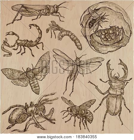 INSECT. Animals around the World. Collection of an hand drawn vector illustrations. Freehand sketches. Line art. Each drawing comprise of a few layers of outlines. Colored background is isolated. Easy editable.