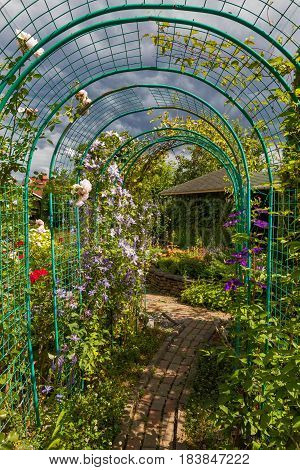 View on home green garden with pergola at sunny day