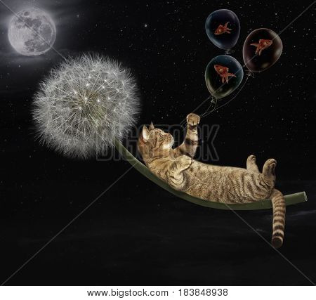 The cat on a dandelion flies in the night sky.