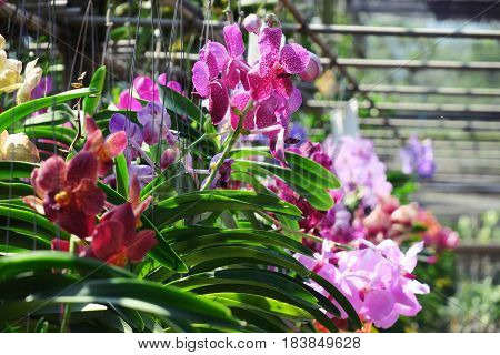 Beautiful colorful orchid flower in nursery farm nature background