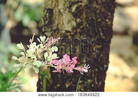 Soft pink flowers and tree trunk abstract garden blur background