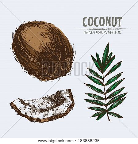 Digital vector color detailed coconut hand drawn retro illustration collection set. Thin artistic linear pencil outline. Vintage ink flat style, engraved simple doodle sketches. Isolated objects