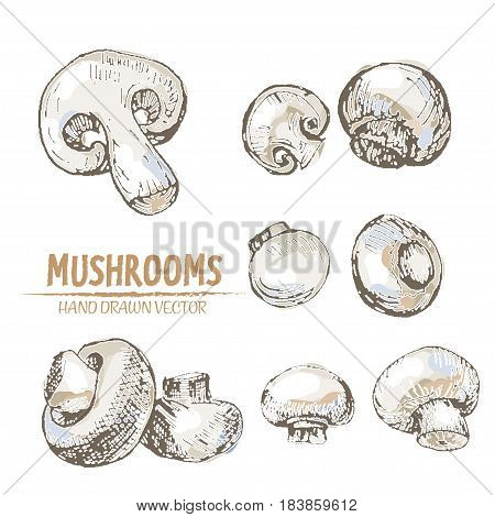 Digital vector color detailed mushrooms hand drawn retro illustration collection set. Thin artistic linear pencil outline. Vintage ink flat style, engraved simple doodle sketches. Isolated objects