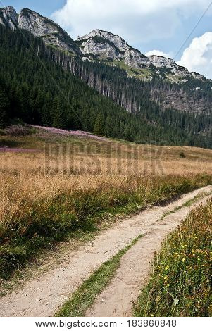 Dolina Kondratowa valley with flowering meadow hiking trail sharp limestone hill above and blue sky with clouds in polish part on Czarwone Wierchy mountain group in polish part of Western Tatras mountains