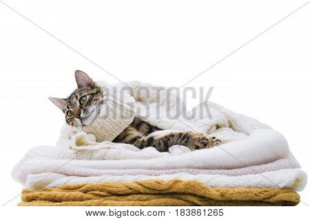 the cat lies on woolen clothes isolated