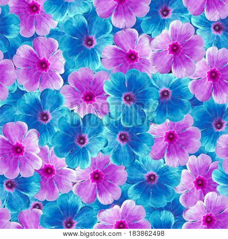 Seamless infinite floral background. For design and printing. Background of natural blue and purple Violets. Nature.