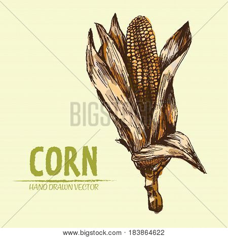 Digital vector color detailed corn hand drawn retro illustration collection set. Thin artistic linear pencil outline. Vintage ink flat style, engraved simple doodle sketches. Isolated objects