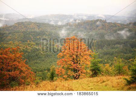 Misty Autumn Background