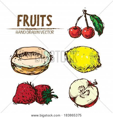 Digital vector color detailed fruit hand drawn retro illustration collection set. Thin artistic linear pencil outline. Vintage ink flat style, engraved simple doodle sketches. Isolated objects