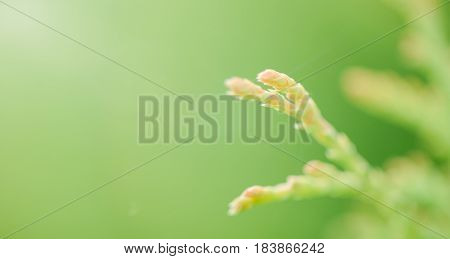 Plant On A Gentle Green Background