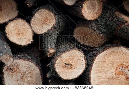 Heap of cut wood timber on sunny day. Closeup