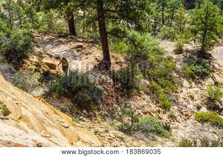 Zion National Park USA - August 9 2015: Aerial viewpoint of Observation Point Trail with male hiker walking on path
