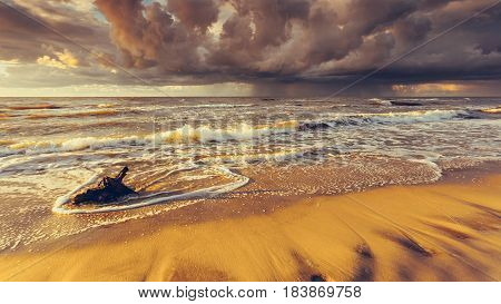 Golden Sunset And Tree Root On Beach