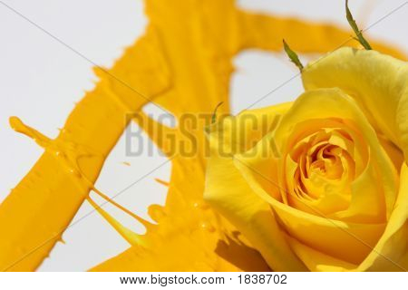 Painted Yellow Rose