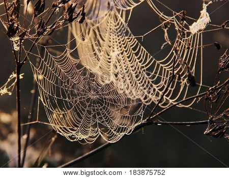the spider's web with dew drops hanging on the branches on blurred background