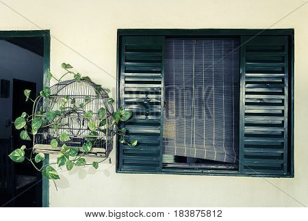 Bird cage decorated with green foliage beside a rustic green window. Cage with no bird inside rustic house decoration.