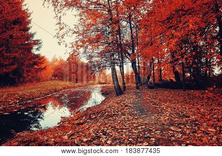 Autumn picturesque landscape in bright colors-autumn trees and narrow forest river in cloudy weather.Autumn forest landscape-yellowed autumn trees and fallen autumn leaves. Vintage autumn landscape
