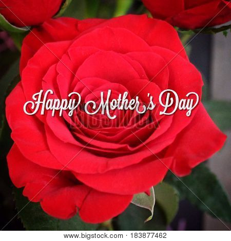 Happy Mother's Day text in white font on red rose bloom closeup.