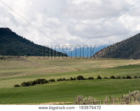 pastoral scene including sheep high desert hillsdistant mountains