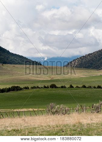 pastoral scene including sheep fence line distant mountains