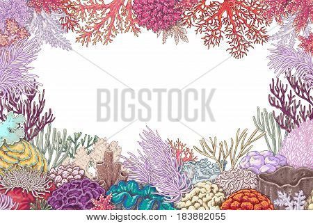 Hand drawn underwater natural elements. Sketch of vivid reef corals on white background. Colored horizontal rectangle frame with space for text.