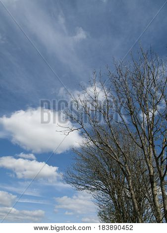 Springtime tree against a blue sky and white cloud formation with copy space for own text