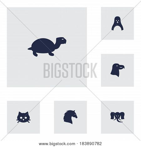 Set Of 6 Alive Icons Set.Collection Of Tortoise, Steed, Pussy And Other Elements.
