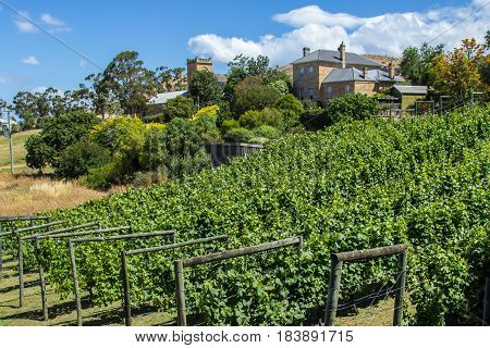 Richmond Tasmania Australia - December 21 2016: Richmond vinyard and winery