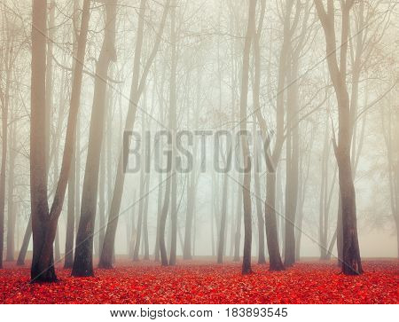 Autumn nature. Picturesque autumn landscape. Autumn foggy park nature - park in dense autumn fog. Autumn deserted park in foggy autumn weather - colorful autumn landscape. Creative filter applied