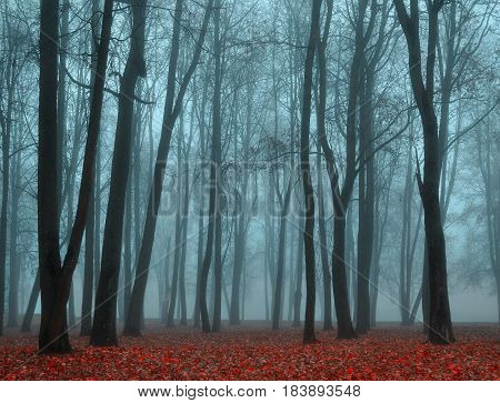 Autumn nature. Picturesque autumn landscape. Autumn foggy park nature - park in dense autumn fog. Autumn deserted park in foggy autumn weather - colorful autumn landscape. Vintage filter applied