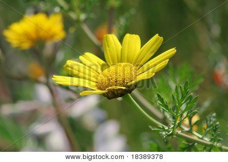 Flowerage #5.