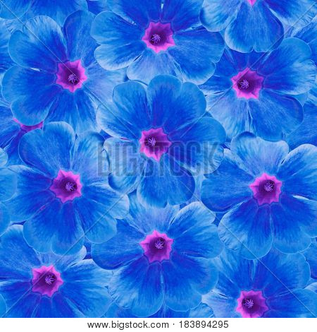 Seamless infinite floral background. For design and printing. Background of natural blue Violets. Nature.