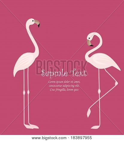 Vector illustration of a pink flamingo. Tropical bird flamingos