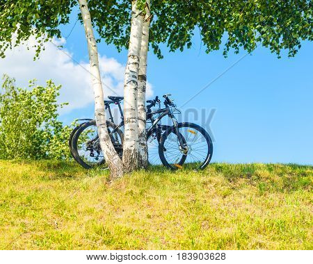 Two bicycles parked under three birches. Leisure and tourism background