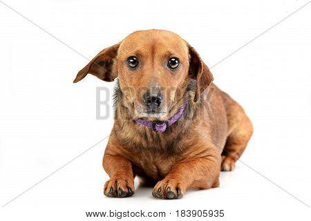 Studio Shot Of An Adorable Mixed Breed Dog