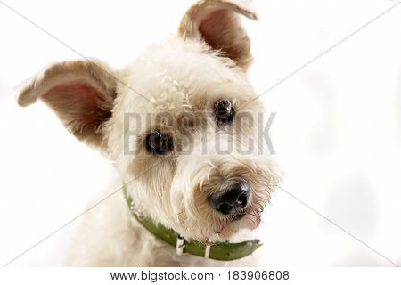 Portrait Of An Adorable Mixed Breed Dog