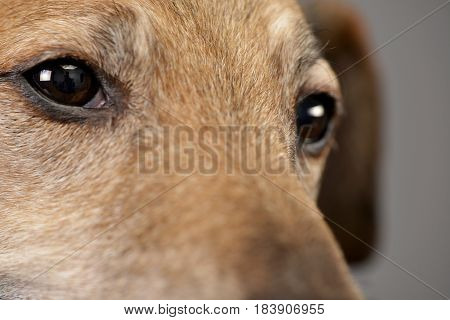Portrait Of On Adorable Mixed Breed Dog