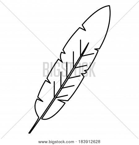 beauty and exotic feather vector illustration design