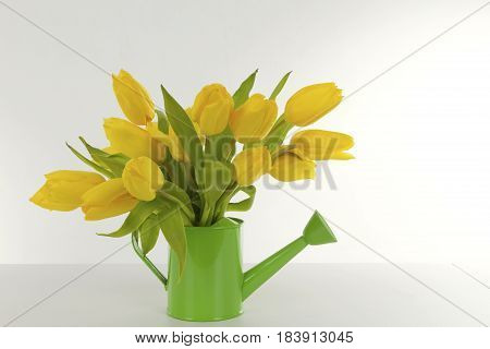 Beautiful yellow tulips on bright background. Shot in Studio.