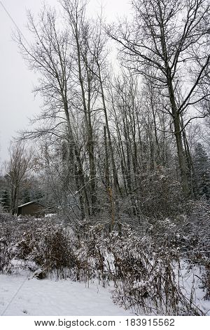 Fresh snow covers trees and bushes at the edge of a forest in Harbor Springs, Michigan, after a November snowstorm.